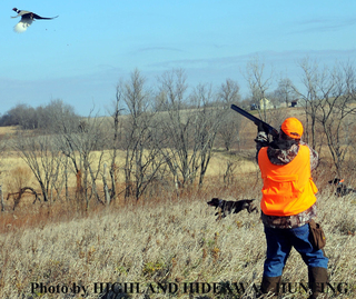 Upland Birds Hunts