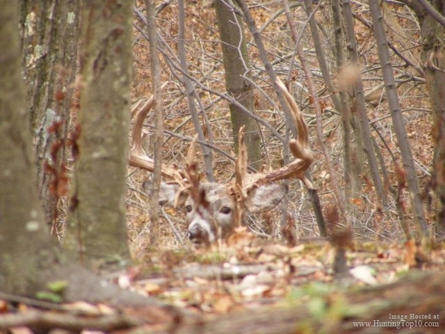 Image result for pennsylvania whitetail snow
