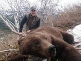 Brown Bear Hunting Alaska 2014.