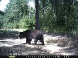 Black Bears Hunting North Carolina.