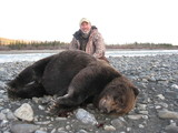 Grizzly Hunting Alaska