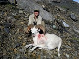 Mountain Sheep Hunting Alaska