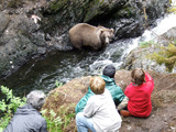Alaska Bear Watching