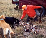 Pheasant Hunting In South Dakota.