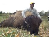 Water Buffalo Hunting in Tennessee.