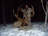 381 Inch Rocky Mountain Elk
