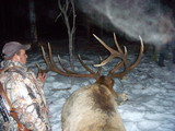 Heavy Horn Outfitters Elk Hunts