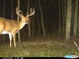 Trophy Whitetail Property, Illinois Whitetail Deer Hunts