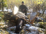 another nice moose