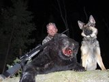 Bear Hunts in Quebec