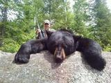 Huge Black Bear Quebec