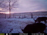trail cam winter 2015-16