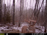 After season deer 2015