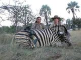 Zebra hunting adventure in African Safari