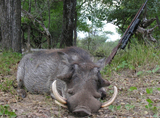 African Safari hunts