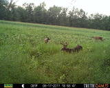 Edge River Outfitters, trail cam pics