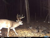 Edge River Outfitters, 2011 trailcam pics