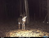 Edge River Outfitters, 2011 trail cam pics