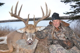 saskatchewan Whitetail Deer