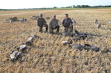 Timberlost Outfitting, saskatchewan goose ducking