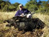 Wild boar hunting California