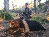 Archery hog hunt.