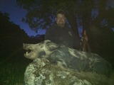 Big hog taken in late Spring.