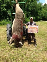 Pure Adrenaline Outfitters, 500lbs Boar