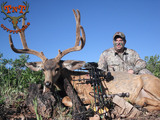 Whitetail Deer Hunts in Colorado