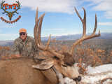 Mule deer hunting in Colorado