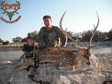 Axis Deer hunting in Texas