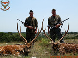 Texas Axis Deer Hunting