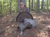 Turkey bow hunt