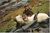 Sheep hunting in Alaska