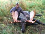 Another Trophy Bull