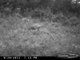 Trail Cam Pictures