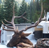 Elk hunting success