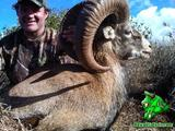 Mouflon Sheep hunting in Hawaii