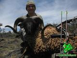 Sheep hunting in Hawaii