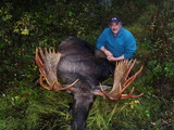Monster Shiras Moose
