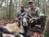 Exotic Sheep Hunting Tennessee