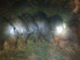 6 Sows with 78 Babies!!!