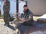 Great buck