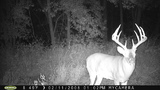 Awesome buck