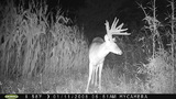 Great ky buck
