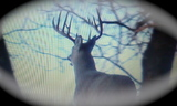 Big ky buck