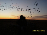Alberta Waterfowl Hunt