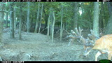 Muddy Creek Whitetails, Trail Cam 2013