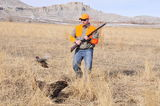 Pheasant hunting in Utah