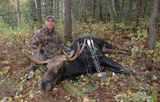 Archery Moose hunt